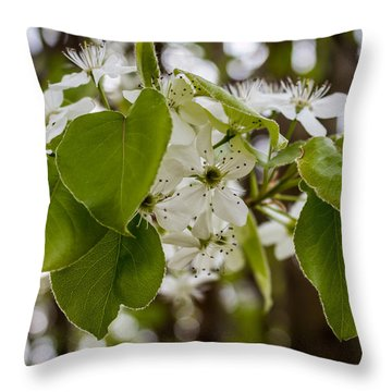 Callery Pear Tree Bloom Throw Pillow