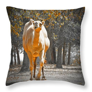 Camel Throw Pillow by Douglas Barnard