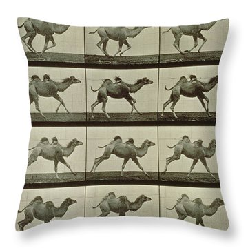Camel Throw Pillow by Eadweard Muybridge