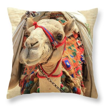 Throw Pillow featuring the photograph Camel by Silvia Bruno