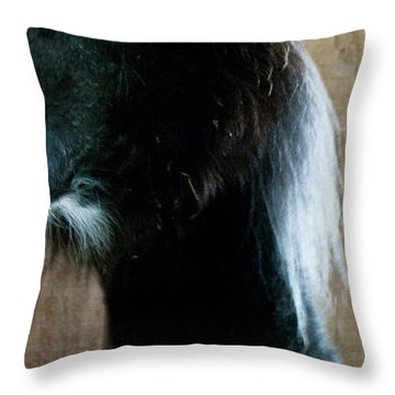 Throw Pillow featuring the photograph Camelid 3 by Catherine Sobredo