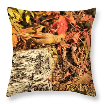 Throw Pillow featuring the photograph Camo Bird by Debbie Stahre