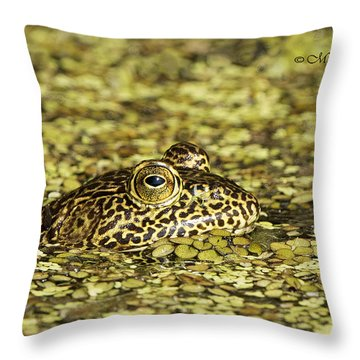 Camo Frog Throw Pillow