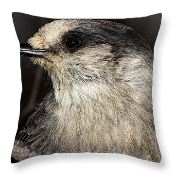 Camp Robber Throw Pillow