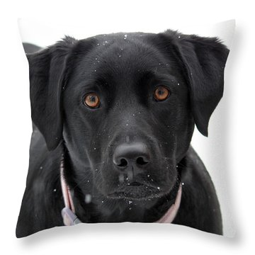 Can I Come In Throw Pillow by Cathy  Beharriell