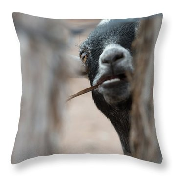 Can I Play? Throw Pillow