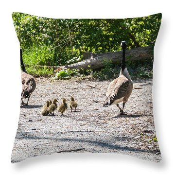 Canada Geese Family Walk Throw Pillow by Edward Peterson