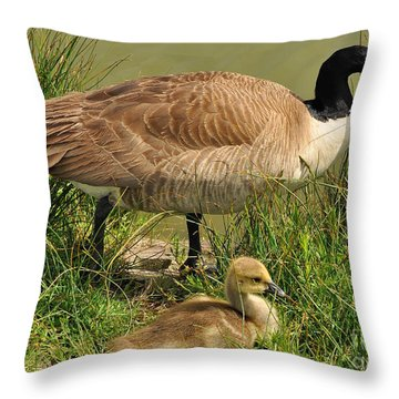 Canada Geese Parent And Child  Throw Pillow by Merrimon Crawford