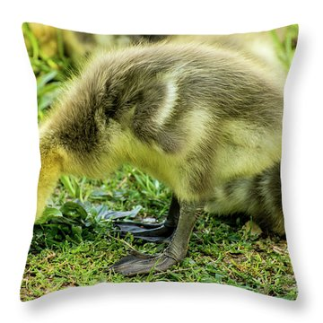 Canada Goose Gosling Throw Pillow by Gary Whitton