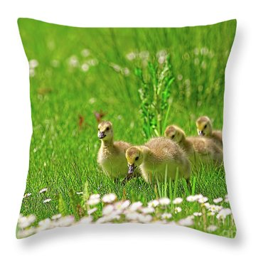 Throw Pillow featuring the photograph Canada Goose Goslings In A Field Of Daisies by Sharon Talson