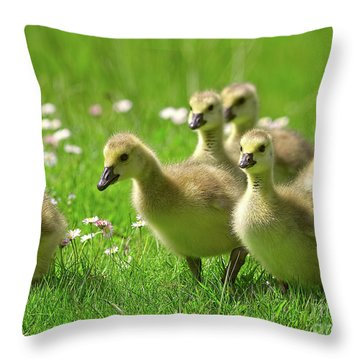 Throw Pillow featuring the photograph Canada Goose Goslings by Sharon Talson