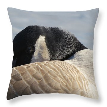 Canada Goose Head Throw Pillow by Mary Mikawoz