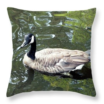 Canada Goose Pose Throw Pillow by Al Powell Photography USA