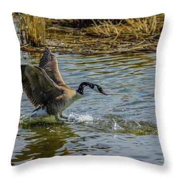 Canada Goose Takes Flight, Frank Lake, Alberta, Canada Throw Pillow