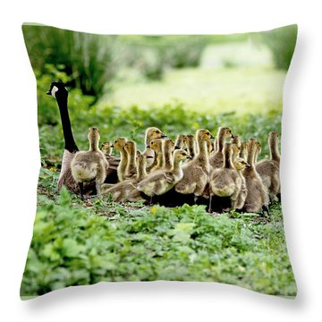 Throw Pillow featuring the photograph Canada Gosling Daycare by Rona Black