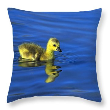 Canada Gosling Goes For A Swim Throw Pillow