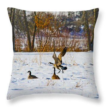 Canadian Geese At Sunrise IIi Throw Pillow