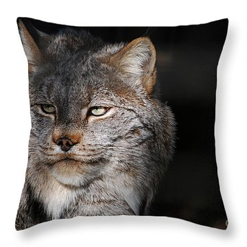 Canadian Lynx  20130107_57 Throw Pillow by Tina Hopkins