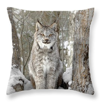 Canadian Wilderness Lynx Throw Pillow