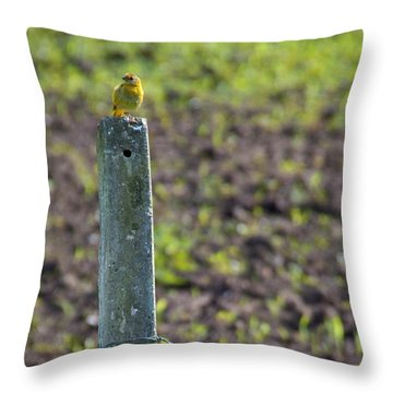 Canary Stop Throw Pillow