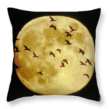 Canda Geese And Moon Throw Pillow by Kenneth Fink and Photo Researchers
