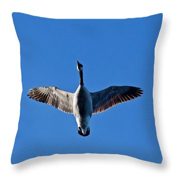 Candian Goose In Flight 1648 Throw Pillow by Michael Peychich