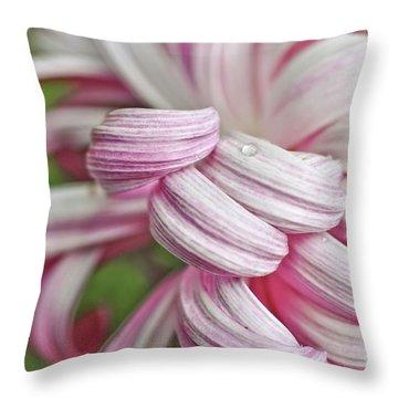 Candy Cane Petals Throw Pillow