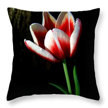Candy Cane Tulip Throw Pillow