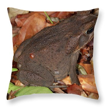 Throw Pillow featuring the photograph Cane Toad by Breck Bartholomew