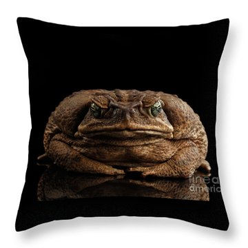 Cane Toad - Bufo Marinus, Giant Neotropical Or Marine Toad Isolated On Black Background, Front View Throw Pillow