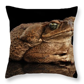 Cane Toad - Bufo Marinus, Giant Neotropical Or Marine Toad Isolated On Black Background Throw Pillow