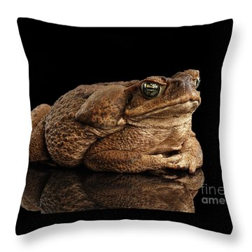Throw Pillow featuring the photograph  Cane Toad - Bufo Marinus, Giant Neotropical Or Marine Toad Isolated On Black Background by Sergey Taran