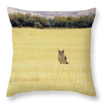 Canidae Throw Pillow
