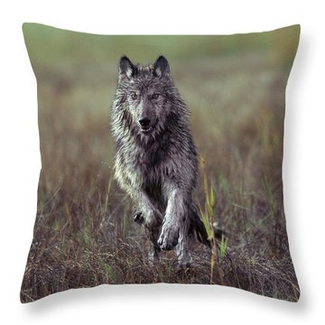 Canis Lupus Throw Pillow by Tim Fitzharris