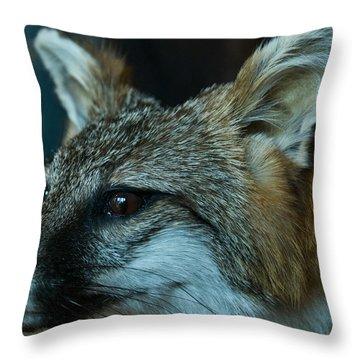 Canis Species Throw Pillow by Douglas Barnett