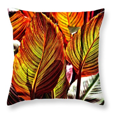 Canna 26106hdr Throw Pillow