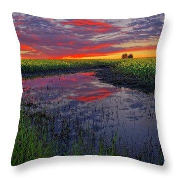 Canola At Dawn Throw Pillow