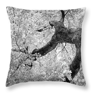 Canopy Of Autumn Leaves In Black And White Throw Pillow