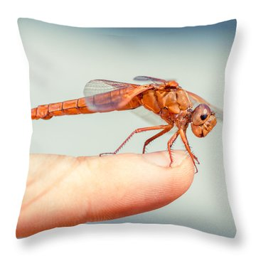 Can't Make Up My Mind Throw Pillow