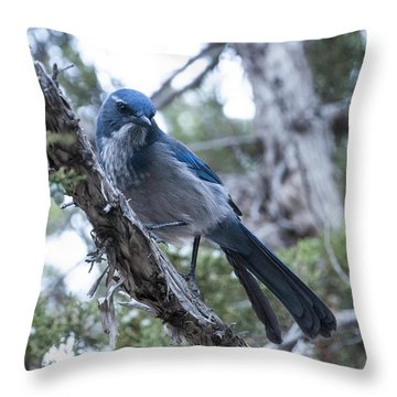 Canyon Jay Throw Pillow