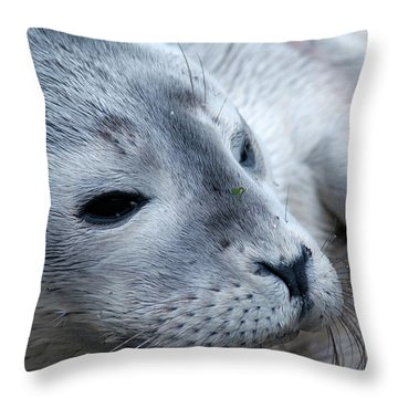 Throw Pillow featuring the photograph Cape Ann Seal by Mike Martin