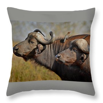 Cape Buffalo And Their Housekeeper Throw Pillow