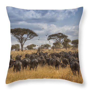Cape Buffalo Herd Throw Pillow by Kathy Adams Clark