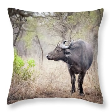Cape Buffalo In A Clearing Throw Pillow