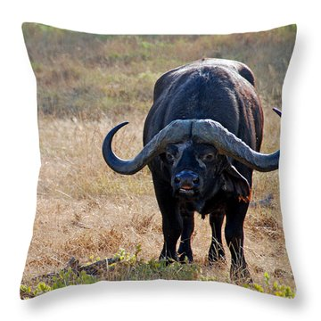 Cape Buffalo Throw Pillow by Pravine Chester