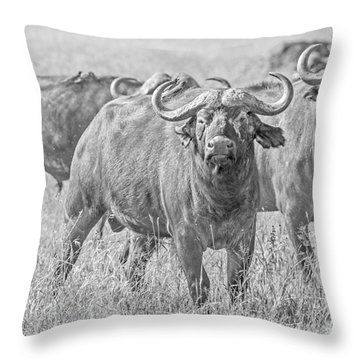 Cape Buffalos In Serengeti Throw Pillow by Pravine Chester