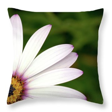 Cape Daisy Throw Pillow