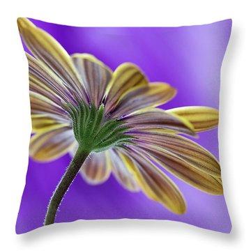 Cape Daisy Throw Pillow