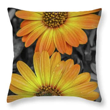 Cape Daisy's - Orange Throw Pillow
