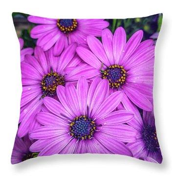 Cape Daisys - Purple Throw Pillow